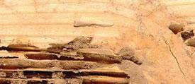 Termite_box