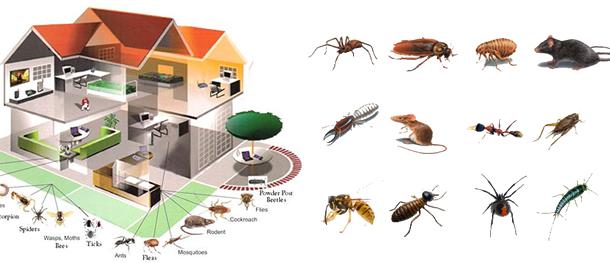 pest_control_main